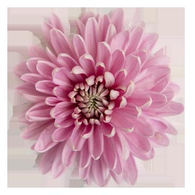 Quik's Farm Floral Shop - Freshest flowers in Chilliwack